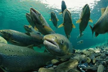 kiedy ryby dla dzieci